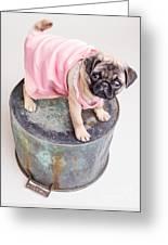Pug Puppy Pink Sun Dress Greeting Card