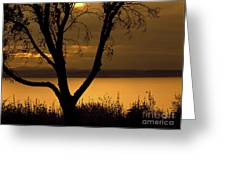 Pugent Sound Silhouetted Tree Greeting Card