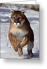 Puma At The Run Greeting Card