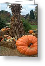 Pumpins And Gourds Greeting Card