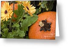 Pumpkin And Gerberas Greeting Card
