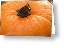 Pumpkin Dew Greeting Card