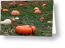 Pumpkin Field Greeting Card