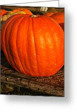 Largest Pumpkin Greeting Card