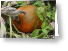 Pumpkin On The Vine Greeting Card