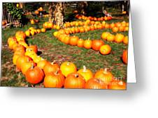 Pumpkin Patch Path Greeting Card by Carol Groenen