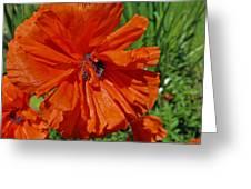 Pumpkin Poppy Greeting Card