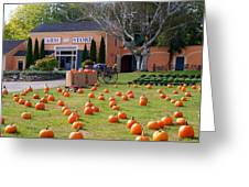 Pumpkins Everywhere Greeting Card