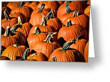 Pumpkins Galore Greeting Card