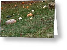 Pumpkins Greeting Card by Susan Herber