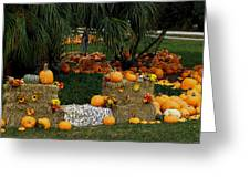 Pumpkins Under The Palms Greeting Card