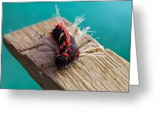 Punk Caterpillar Greeting Card