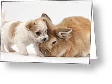 Pup And Rabbit Greeting Card