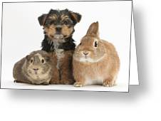Pup, Guinea Pig And Rabbit Greeting Card