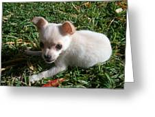 Pup In The Grass Greeting Card