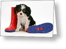 Puppies With A Childs Rain Boots Greeting Card