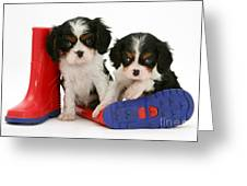 Puppies With Rain Boats Greeting Card
