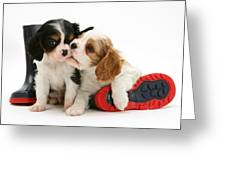 Puppies With Rain Boots Greeting Card by Jane Burton