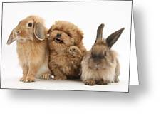 Puppy And Rabbits Greeting Card