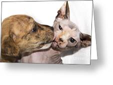Puppy Kissing Alien Cat Greeting Card