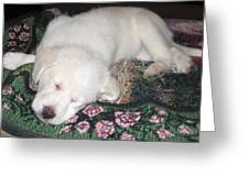 Puppy Nap Greeting Card