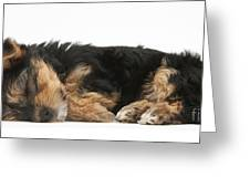 Puppy Nap Greeting Card