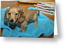 Puppy On Blue Blanket Greeting Card