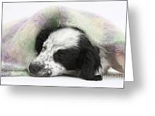 Puppy Sleeping Under Scarf Greeting Card