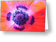Pure Poppy Greeting Card