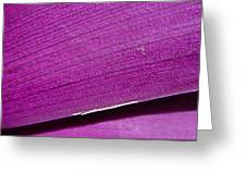 Pure Purple Greeting Card