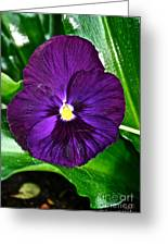 Pure Purple Greeting Card