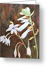 Pure White Greeting Card