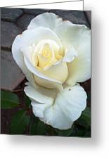 Pure White Rose Greeting Card by Leslye Miller