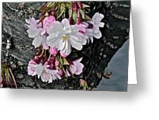 Pure Wisdom II Greeting Card by Rotaunja