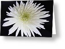 Purity Greeting Card