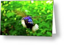 Purple And Blue Hummingbird  Greeting Card