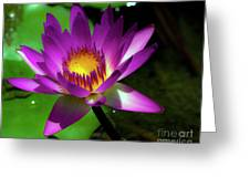 Purple And Gold Three Greeting Card