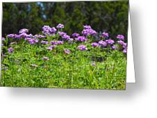Purple And Green Greeting Card by Rebecca Cearley