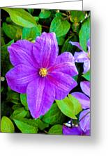 Purple And Green Greeting Card by Sergio Aguayo
