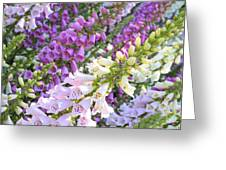 Purple And White Foxglove Square Greeting Card
