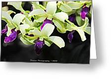 Purple And White Orchid Accent Fx  Greeting Card