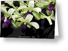 Purple And White Orchid Fx  Greeting Card