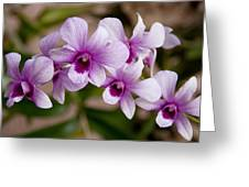 Purple And White Orchids Greeting Card