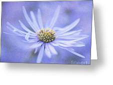 Purple Aster Flower Greeting Card