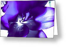 Purple Blast Greeting Card