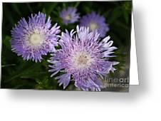Purple Blossoms Greeting Card