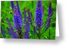 Purple Blue Yellow Green Greeting Card