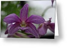 Purple Breeze  Greeting Card