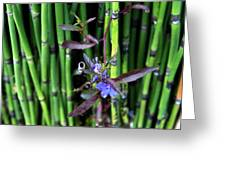 Blue Bursts From Bamboo Greeting Card