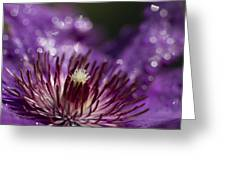 Purple Clematis And Bokeh Greeting Card